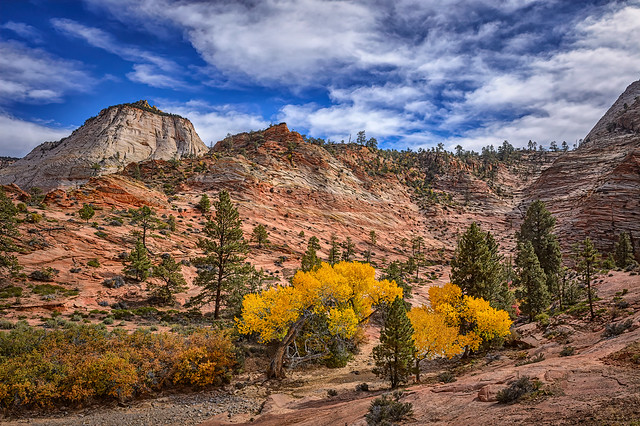 View of sandstone rock formations and autumn leaves along Highway 9 near the entrance to Zion National Park, Utah