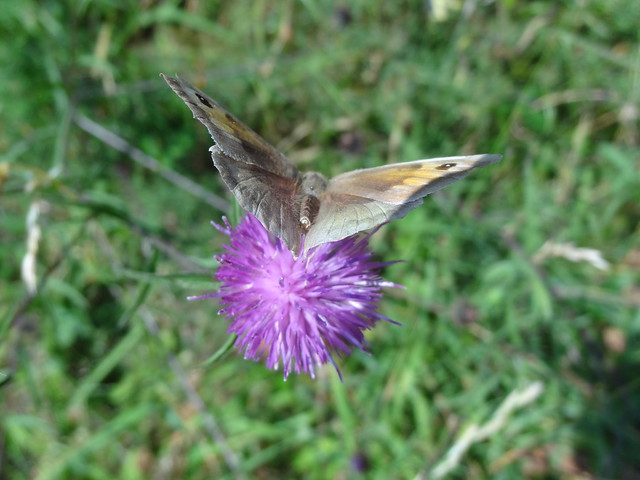 Bacton Backwards: Butterfly (or moth?)