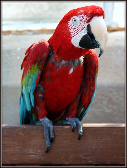 Meet Mr Macaw