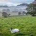 Loweswater fields