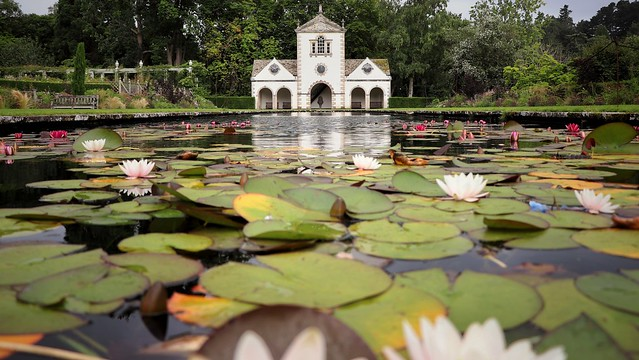 Across the lily pond