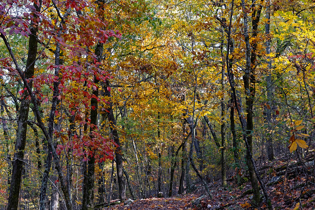 Autumn, You Are So Wistfully Wonderful! (Hot Springs National Park)