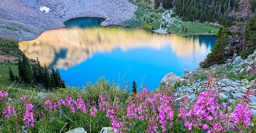 blue lakes lake mountains forest trail flowers sunrise colorado bluelakes wildflowers