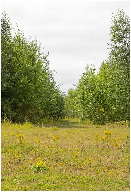 Havoc Meadow, Dumbarton-4