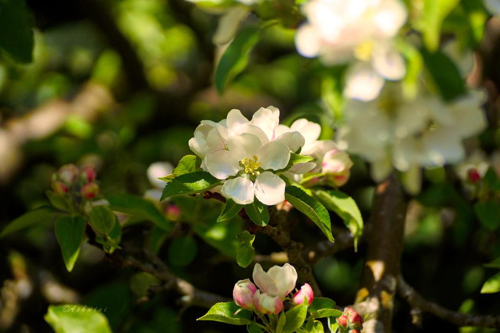 Blooming Beauties (On Explore)