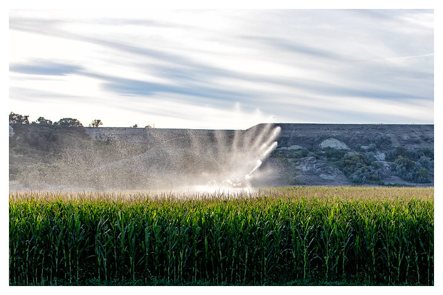 Corn Field Irrigation