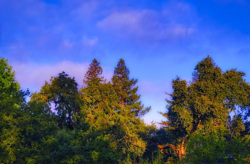 olympus omd landscape sunrise trees