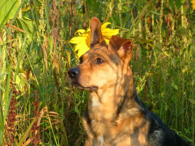 Meine Sonne in den Sonnenblumen :-)