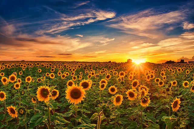 United in the sun