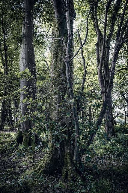 Triplets at Unity woods Cornwall UK