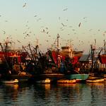 9. August 2020 - 7:59 - L'heure exquise - Chansons, Renaldo Hanh- Essaouira Maroc