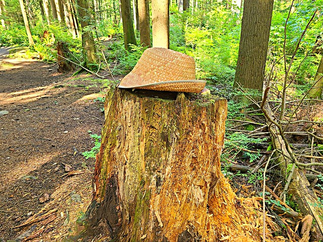 A hat on a stump