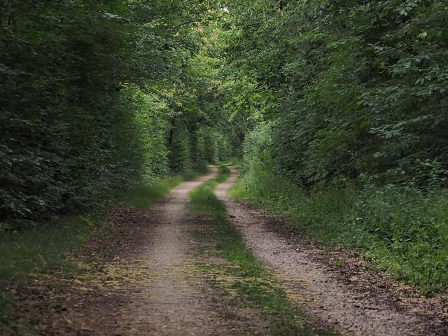 Ein Waldweg auf der Sophienhöhe.