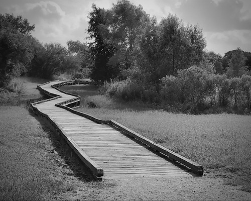 sky boardwalk rosenberg texas monochrome blackwhite landscape seabournecreek trees