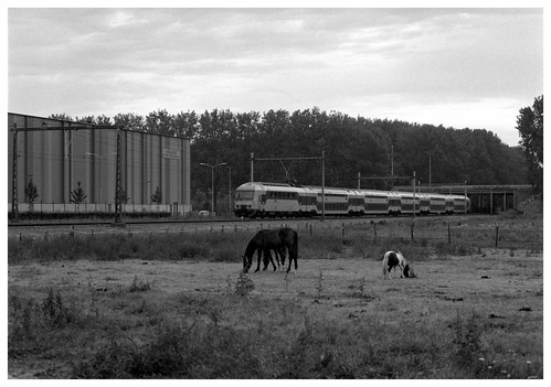 2 Horses with train | by hasselbladuser