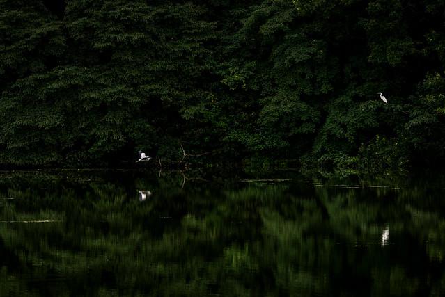 湖畔の情景 #3ーLakeside scene #3