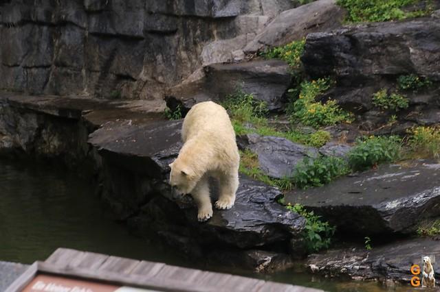 17Eigene Bilder Tierpark Friedrichsfelde26.07.2020 Bulk Watermark