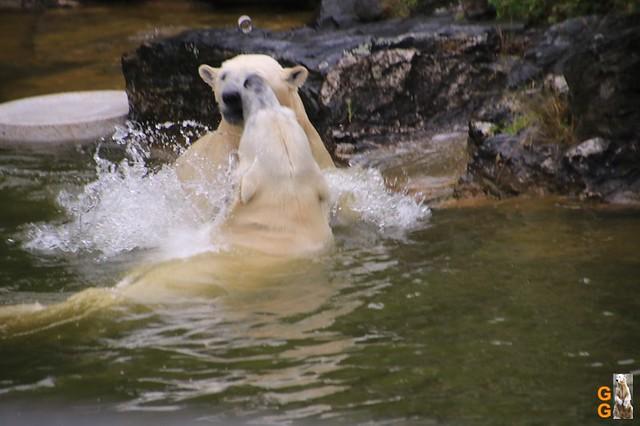 10Eigene Bilder Tierpark Friedrichsfelde26.07.2020 Bulk Watermark