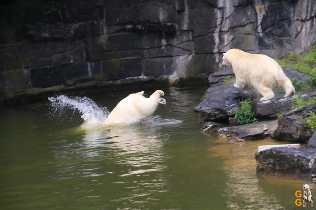 7Eigene Bilder Tierpark Friedrichsfelde26.07.2020 Bulk Watermark