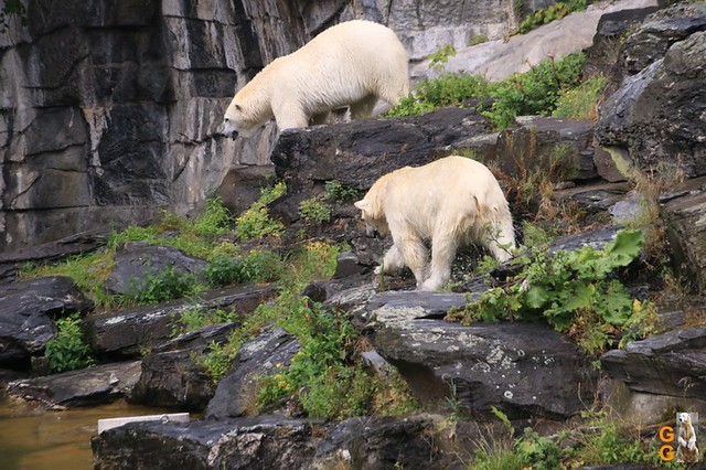 5Eigene Bilder Tierpark Friedrichsfelde26.07.2020 Bulk Watermark
