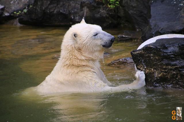 2Eigene Bilder Tierpark Friedrichsfelde26.07.2020 Bulk Watermark