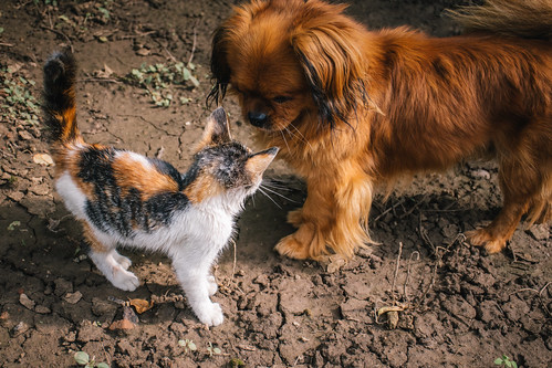 Curious cat and dog sniffing each other out | by Ivan Radic