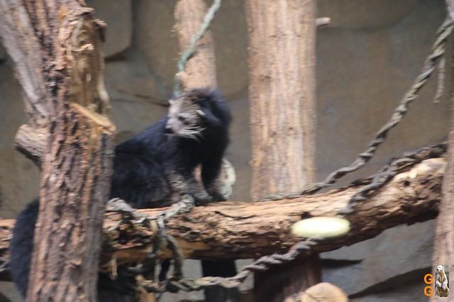 41Eigene Bilder Tierpark Friedrichsfelde26.07.2020 Bulk Watermark