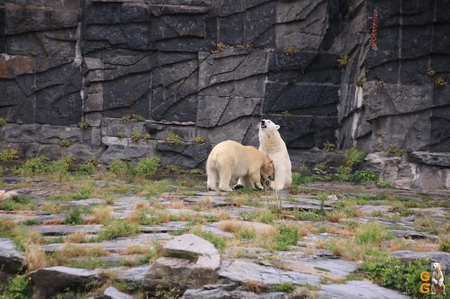 19Eigene Bilder Tierpark Friedrichsfelde26.07.2020 Bulk Watermark