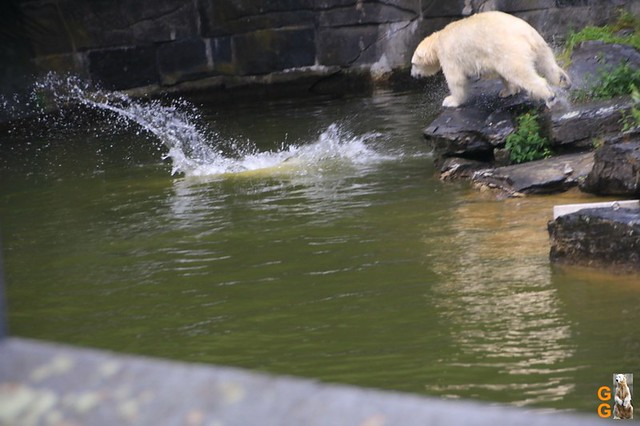 8Eigene Bilder Tierpark Friedrichsfelde26.07.2020 Bulk Watermark