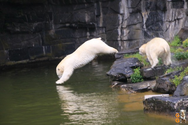 6Eigene Bilder Tierpark Friedrichsfelde26.07.2020 Bulk Watermark