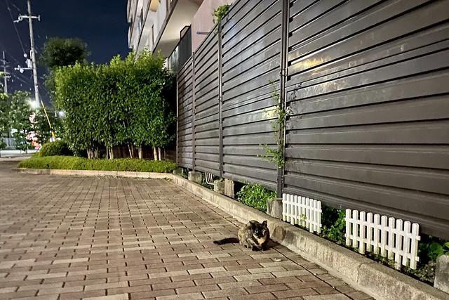 Today's Cat@2020ー08ー09