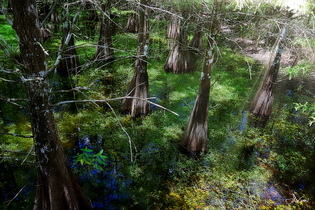 6 Mile Cypress Preserve