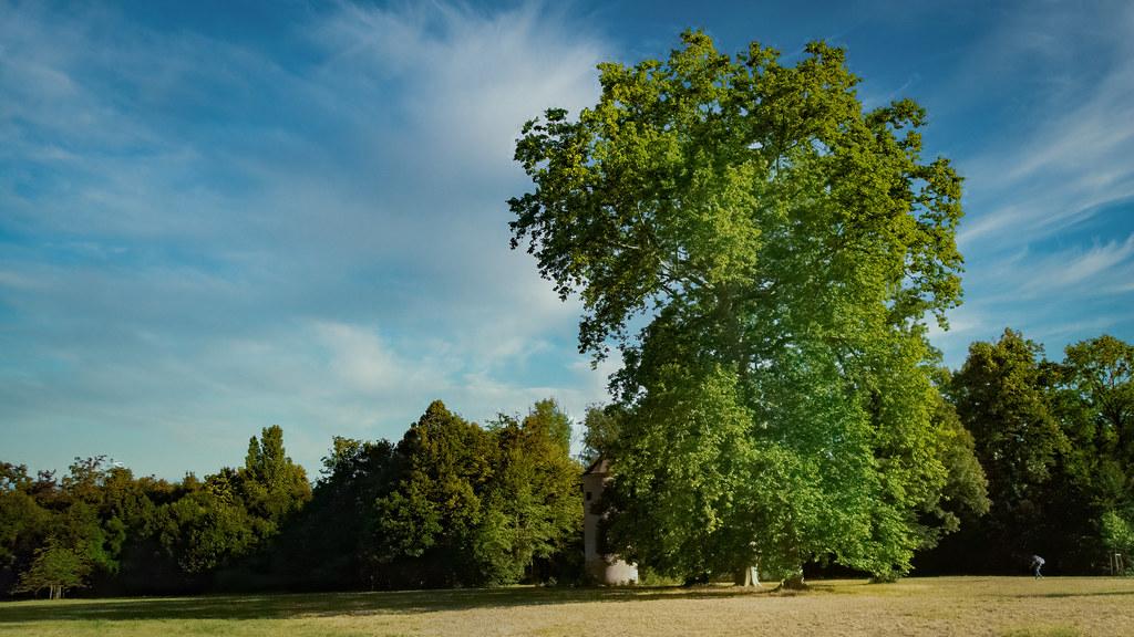 Les grands arbres du parc de Pourtalès... 50206204413_e136cb16cc_b