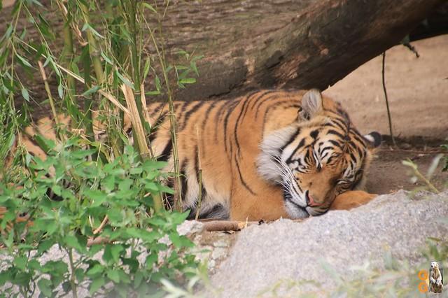 60Eigene Bilder Tierpark Friedrichsfelde26.07.2020 Bulk Watermark