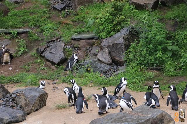 47Eigene Bilder Tierpark Friedrichsfelde26.07.2020 Bulk Watermark