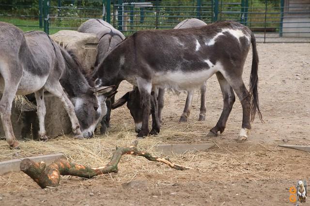 30Eigene Bilder Tierpark Friedrichsfelde26.07.2020 Bulk Watermark