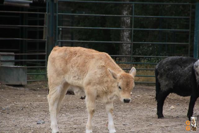 28Eigene Bilder Tierpark Friedrichsfelde26.07.2020 Bulk Watermark