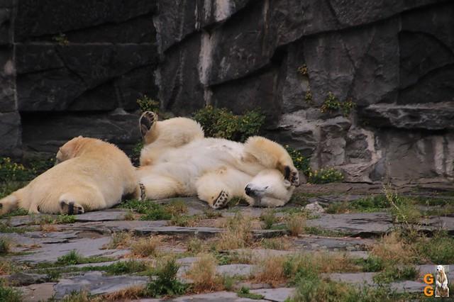 21Eigene Bilder Tierpark Friedrichsfelde26.07.2020 Bulk Watermark