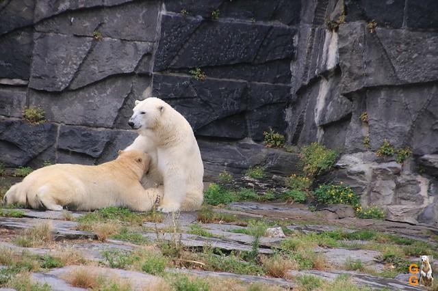 20Eigene Bilder Tierpark Friedrichsfelde26.07.2020 Bulk Watermark