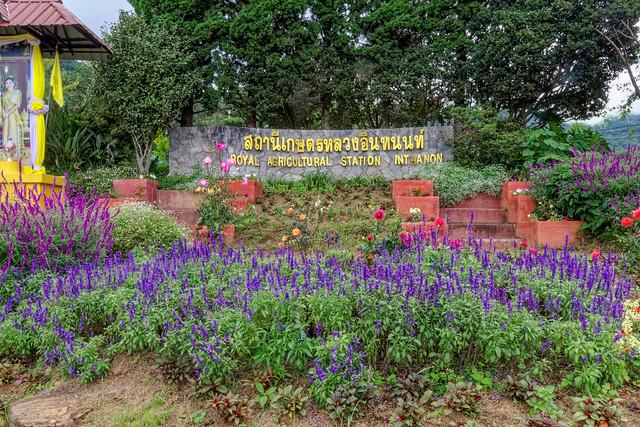 Royal Project Doi Ithanon-1