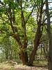 Tree - Woestduin by Henk van der Eijk