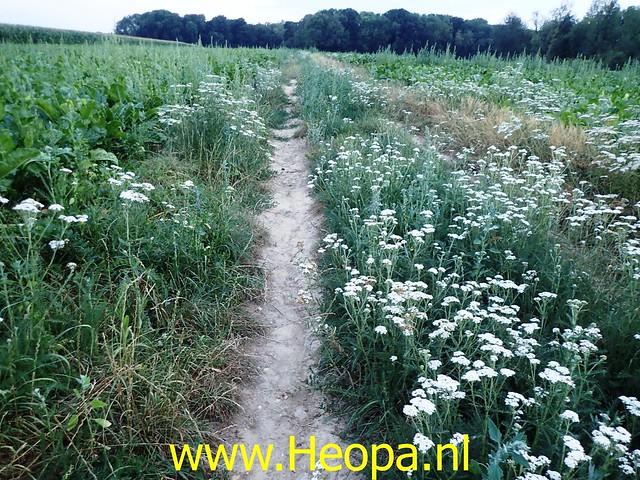 2020-08-08 Avond wandeling   Schin op Geul 13 Km (40)