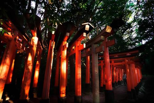 torii gates orange red fushimi inaritaisha afternoon sunset tunnel people walk explore magic mystical religion shinto culture rice god forest nature experience 伏見稲荷大社