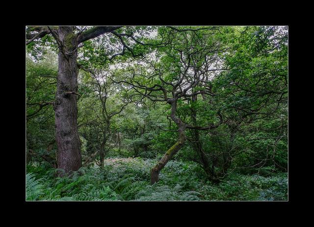 Hedley Hall woods