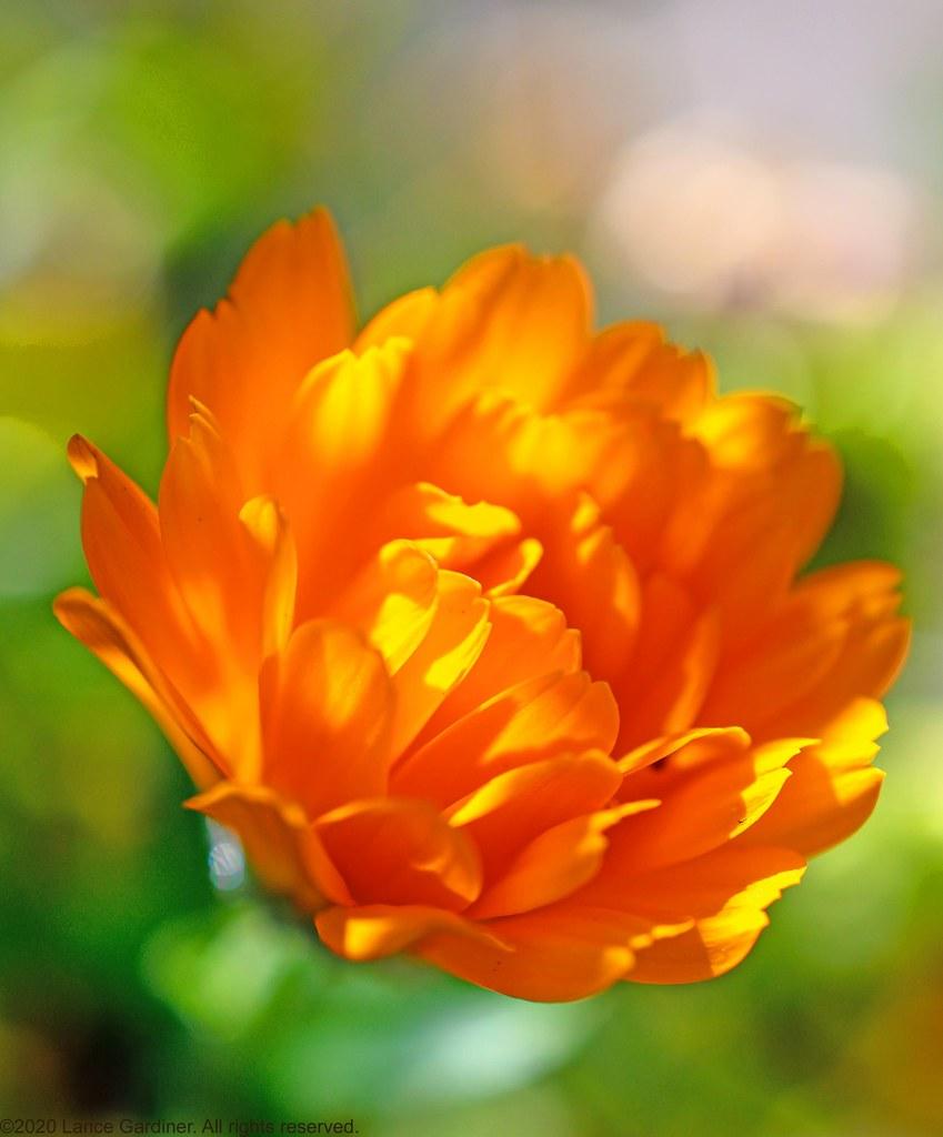 Flicker flicker little flower