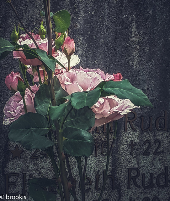 And I won't forget to put roses on your grave...