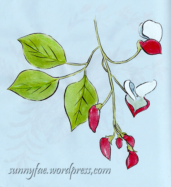 runner bean flowers colour