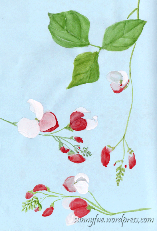 some watercolour runner bean flowers