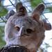 "<p><a href=""https://www.flickr.com/people/154721682@N04/"">Joseph Deems</a> posted a photo:</p>  <p><a href=""https://www.flickr.com/photos/154721682@N04/50208254117/"" title=""Harpy Eagle""><img src=""https://live.staticflickr.com/65535/50208254117_ced3283920_m.jpg"" width=""240"" height=""229"" alt=""Harpy Eagle"" /></a></p>  <p>Dallas Zoo</p>"