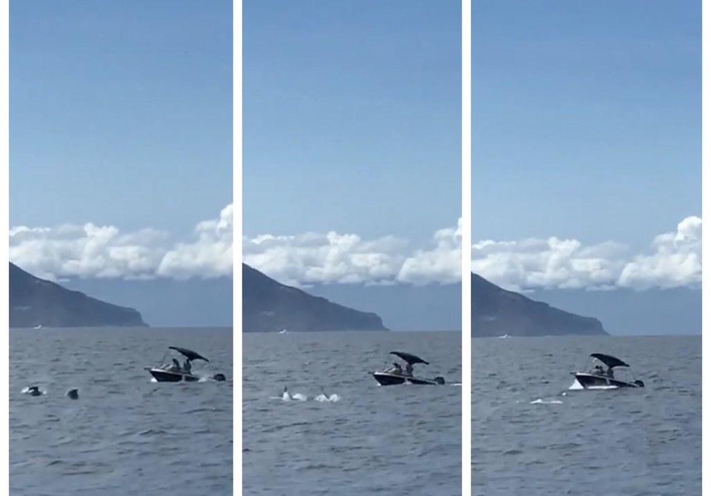 宜蘭海域上快艇追逐衝撞海豚,海豚快速下潛。照片來源:縣政府提供民眾檢舉影片截圖